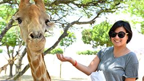 Have an extraordinary face-to-face encounter with the world's tallest animal – the Giraffe. Feed and interact with these warm and friendly animals from our specially designed feeding platform. An experience unlike any other. The feeding platform is also periodically visited by a variety of other animals including Zebra's, Nyala's and Ostriches.