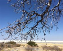 One of the mesmerizing view that you can enjoy in the pan. © Makgadikgadi Adventure Camp