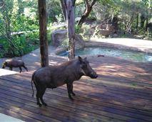 Visitors on the back deck