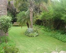 Lovely cool compact garden seen from the bedrooms. We have a lot of birds in our trees.