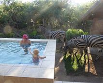 Grandpa and grandchild enjoy playing in the splash pool while zebras come through to graze on the grass!