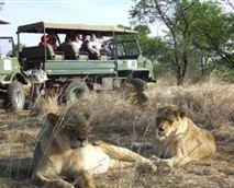 Lion Tours arranged on the estate