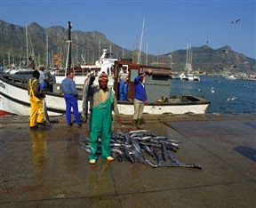 Hout Bay snoek fisherman