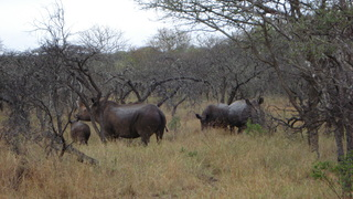 Experience at Rhino River Lodge