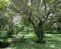 This part of the garden provides a welcome shaded area from the heat of summer and is home to a plethora of birds in season. It is a peaceful place to relax, unwind watch the bird life and listen to the sounds of Africa in a truly tranquil setting.<br />