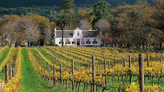 Things to do in Constantia