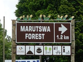 Marutswa Forest Hiking Trails