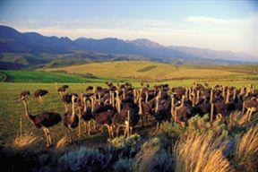 Little Karoo Ostrich Farm