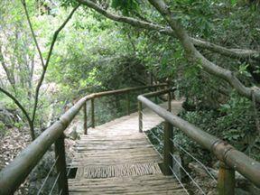 Bushbabies Monkey Park