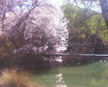 Lushof Lodge during Spring.