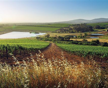 <br /> © Burgherspost Wine Estate
