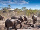 Zimbabwe Tented Camp