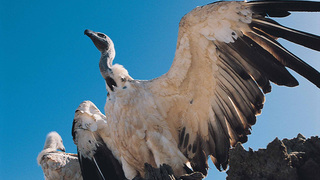 Things to do in Blouberg Nature Reserve