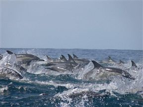 These dolphins were swimming alongside the boat - what a great sight!