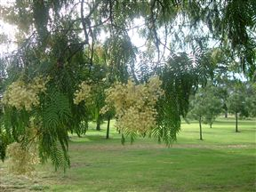 Paarl Golf Club has over 100 year history. Shady trees on the 10th.