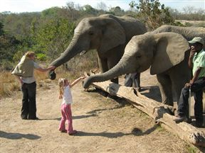 Feeding the Elephants!