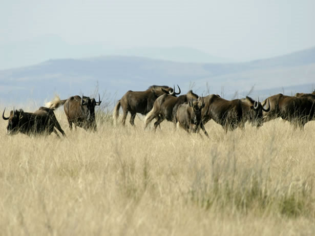 Tsolwana Nature Reserve