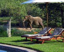Wildlife at Huab Lodge