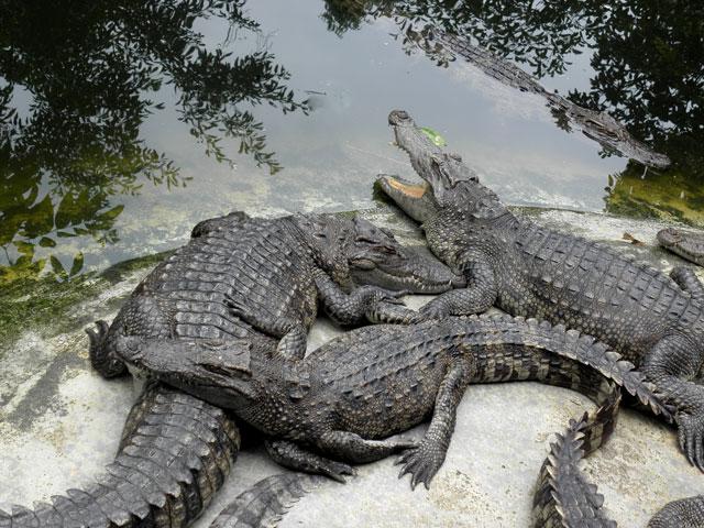 b4ed7d4323f06a Riverbend Crocodile Farm