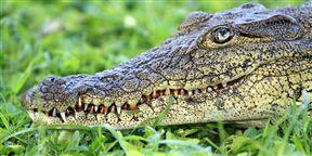 c079fea8c149e3 Riverbend Crocodile Farm. Southbroom.