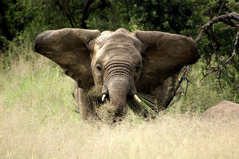 Nambiti Big 5 Private Game Reserve - Ladysmith, KwaZulu ...