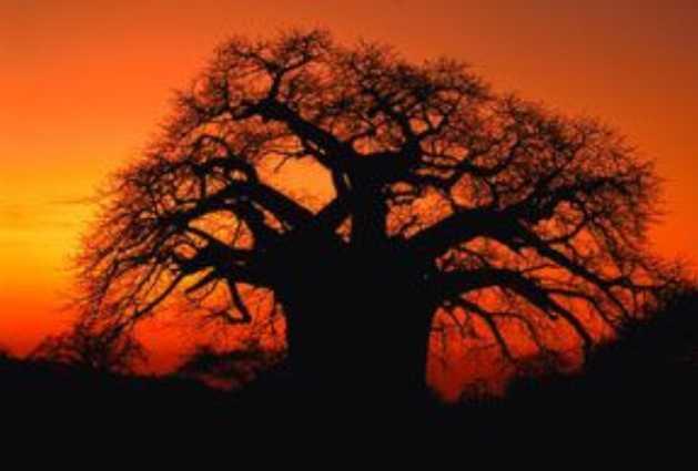 Limpopo Province Accommodation