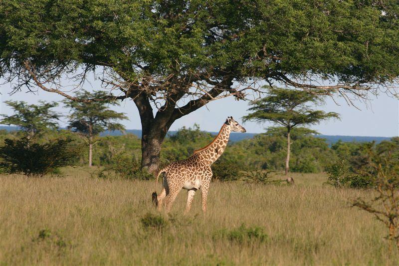 Saadani National Park Accommodation