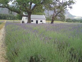 Franschhoek Accommodation