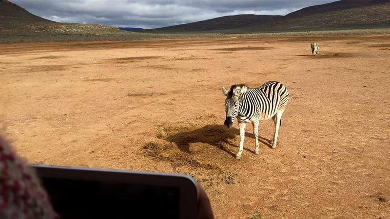 Zebra at Aquila Private Game Reserve