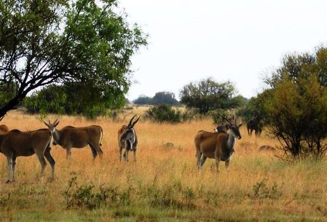 Bloemhof wildlife