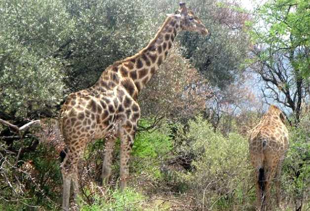 Pilanesberg Game Reserve Accommodation