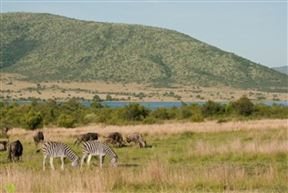 Pilanesberg Game Reserve Accommodation