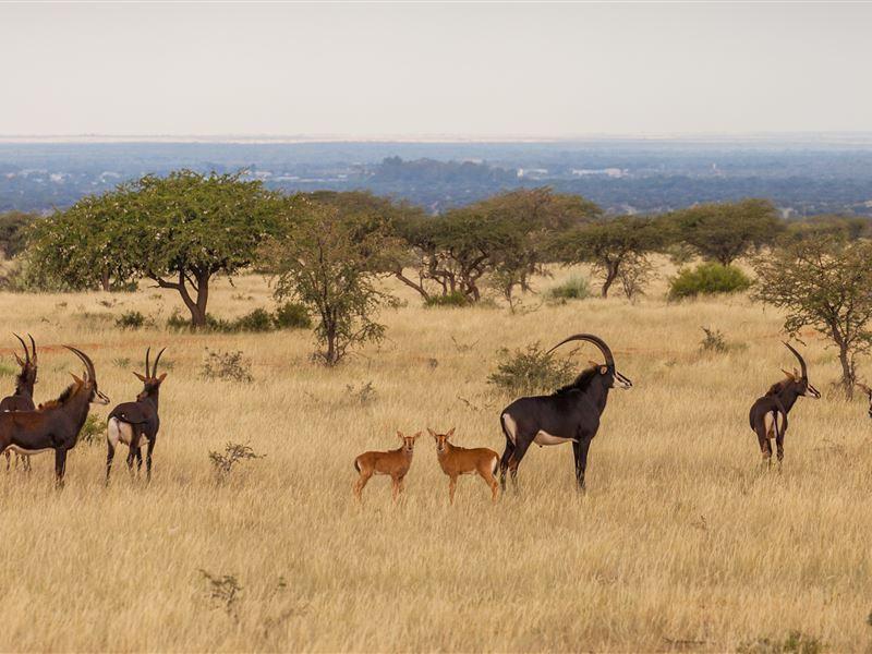 Kalahari Region Accommodation