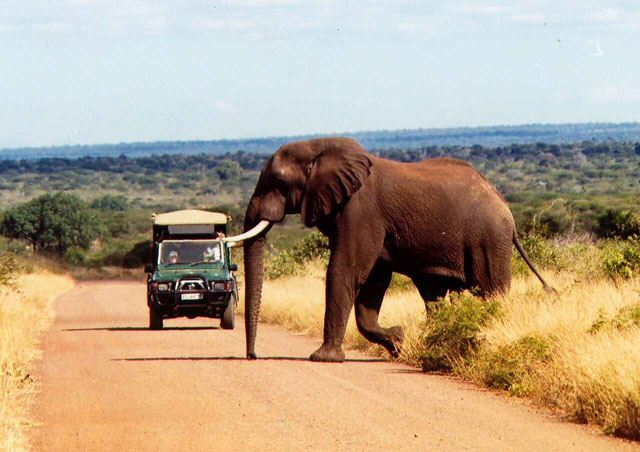 safari in kruger national park price