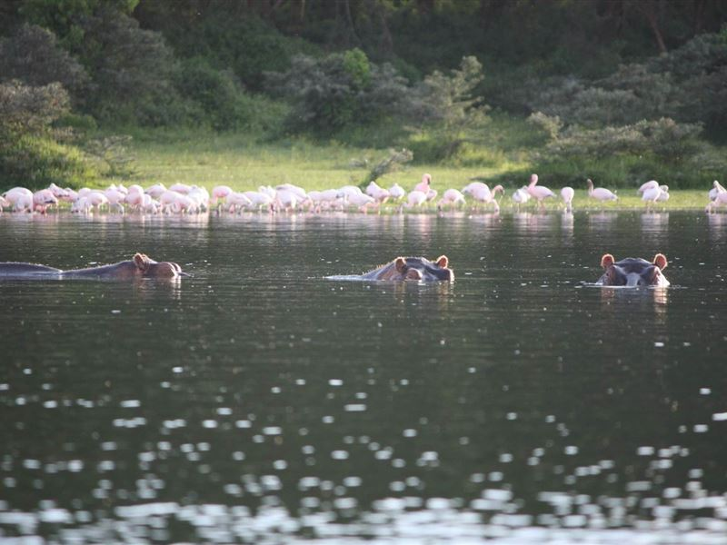 Lake Naivasha Accommodation