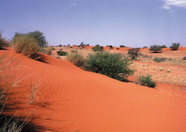 Kalahari dunes