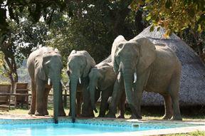 South Luangwa Nat Park