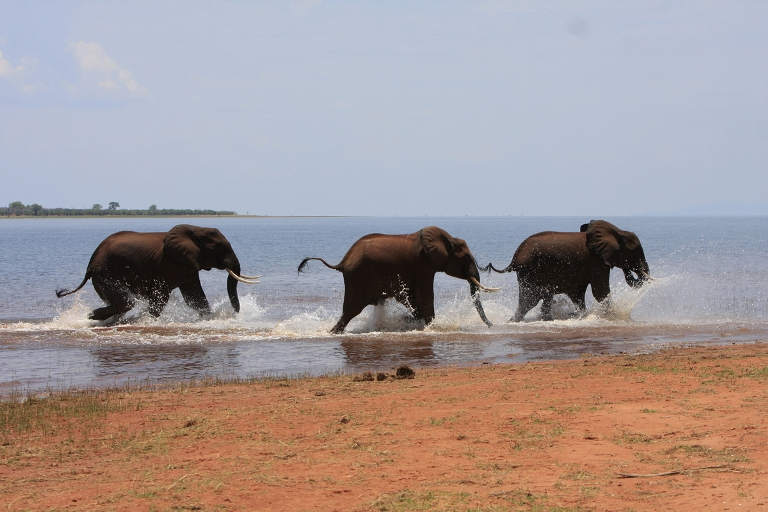 Elephants of Lake Kariba