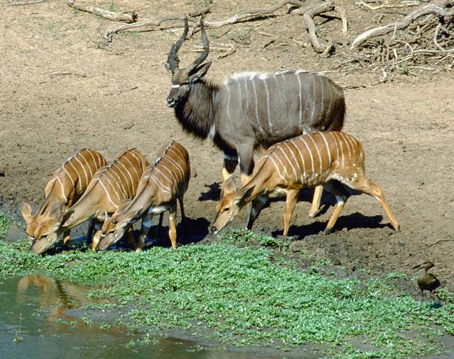 Mlilwane Wildlife Sanctuary Accommodation