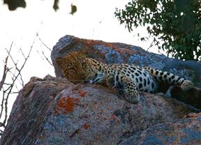 Matobo National Park Accommodation