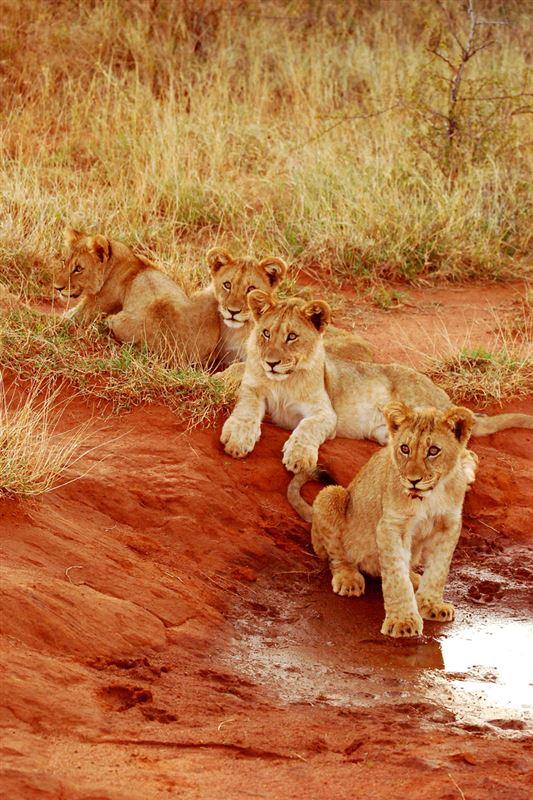 Madikwe Game Reserve Accommodation