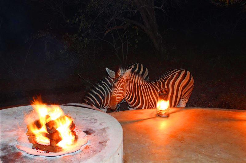 Zebras at Marloth Park