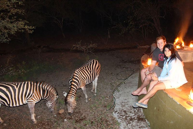 Zebra interaction in Marloth Park