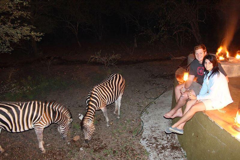 Zebra interaction in Marloth Park