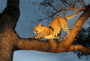 Kruger National Park Accommodation