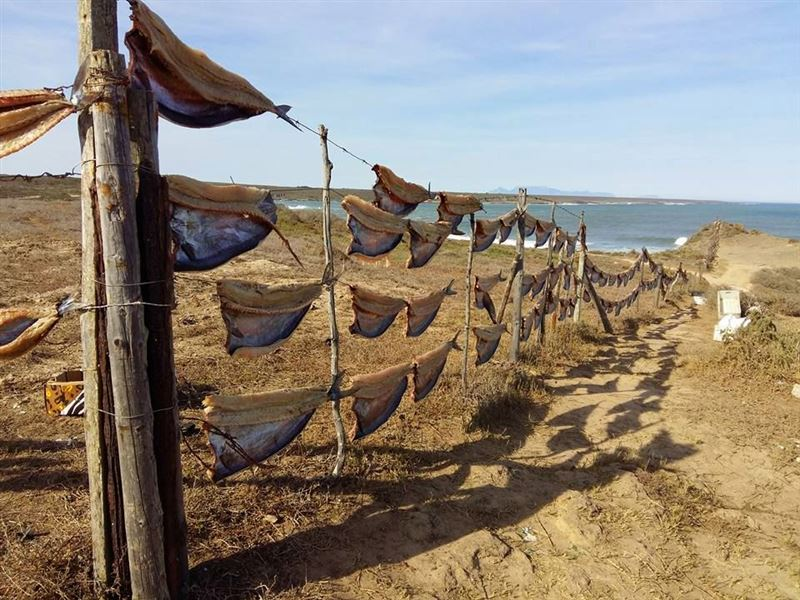 Fish drying on the West Coast