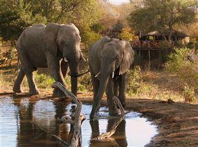 Timbavati Reserve Accommodation