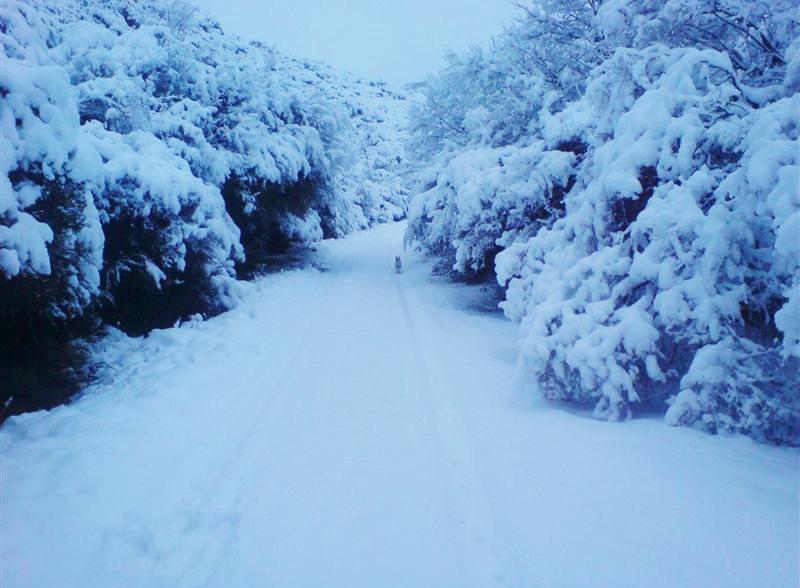 Lady Grey snowfall
