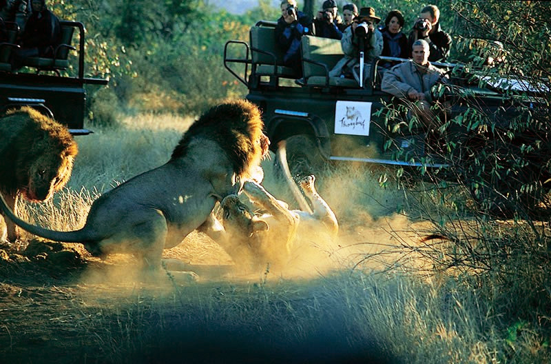 Thornybush Game Reserve Model.PageTitle