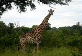 Kruger Surrounds Accommodation
